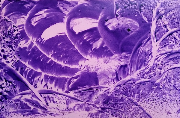 Purple abstract, Octopus by Lorraine Bradford